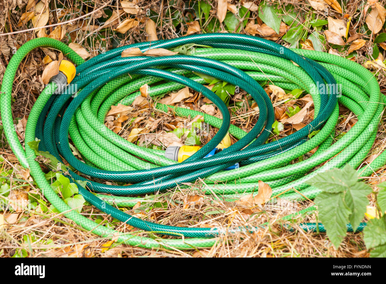 A coiled garden hose - Stock Image