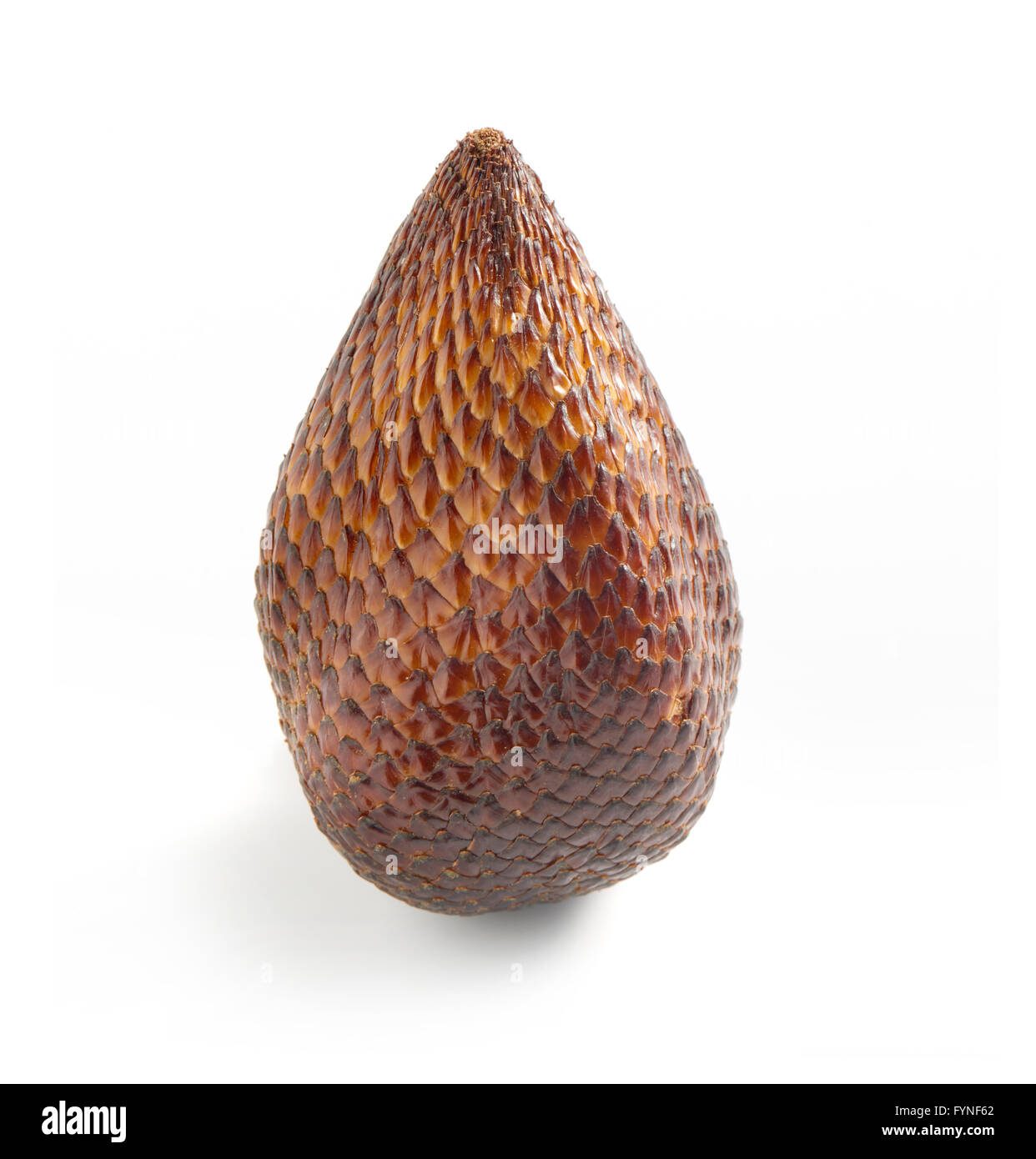 Close Up Still Life of Single Exotic Salak Palm Fruit with Brown Scaly Skin on White Background with Copy Space - Stock Image