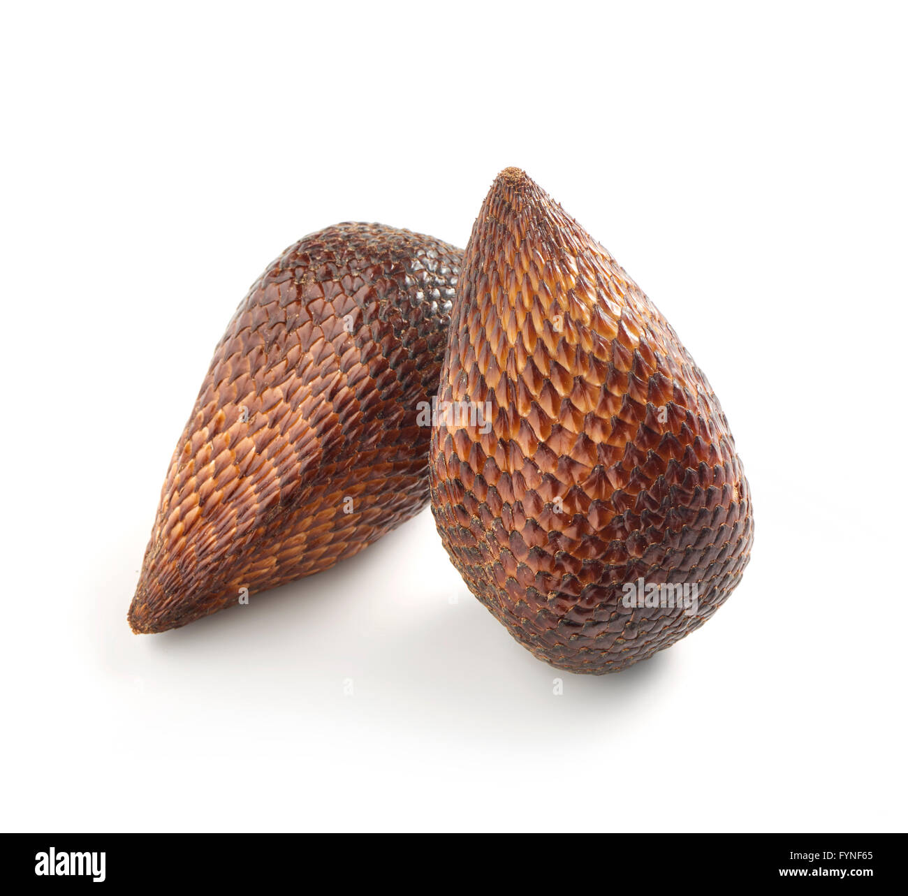 Close Up Still Life of Two Exotic Salak Palm Fruit with Brown Scaly Skin on White Background with Copy Space in - Stock Image