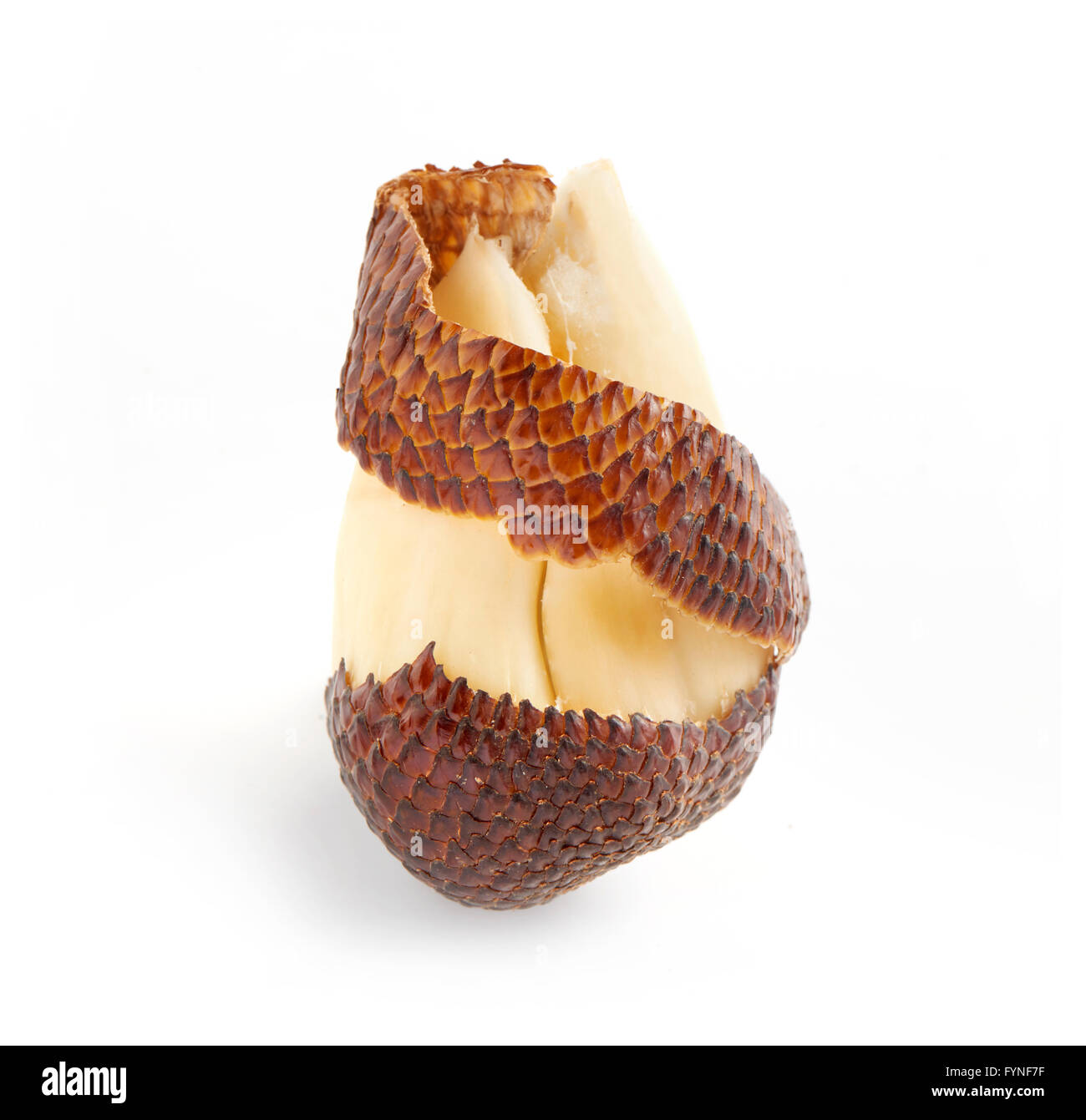 Close Up Still Life of Partially Peeled Exotic Salak Palm Fruit with Brown Scaly Skin on White Background with Copy - Stock Image