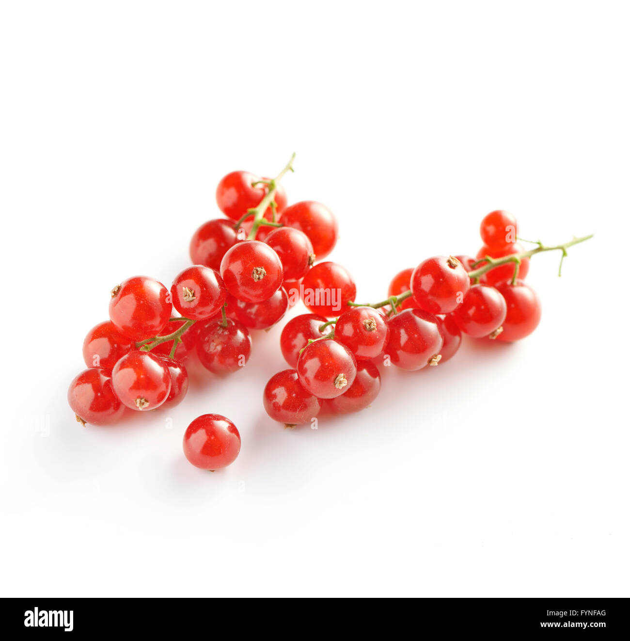 Close Up Still Life of Two Sprigs of Red Ripe Currants on White Background with Copy Space in Square Image Format - Stock Image