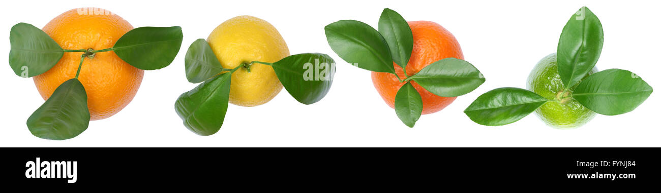 Collection of oranges fruits lemons in a row top view isolated on a white background - Stock Image