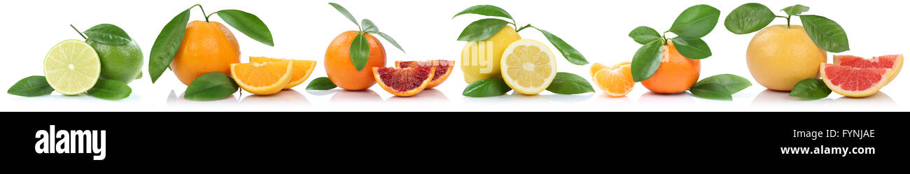 Collection of oranges mandarin lemon grapefruit fruits in a row isolated on a white background - Stock Image