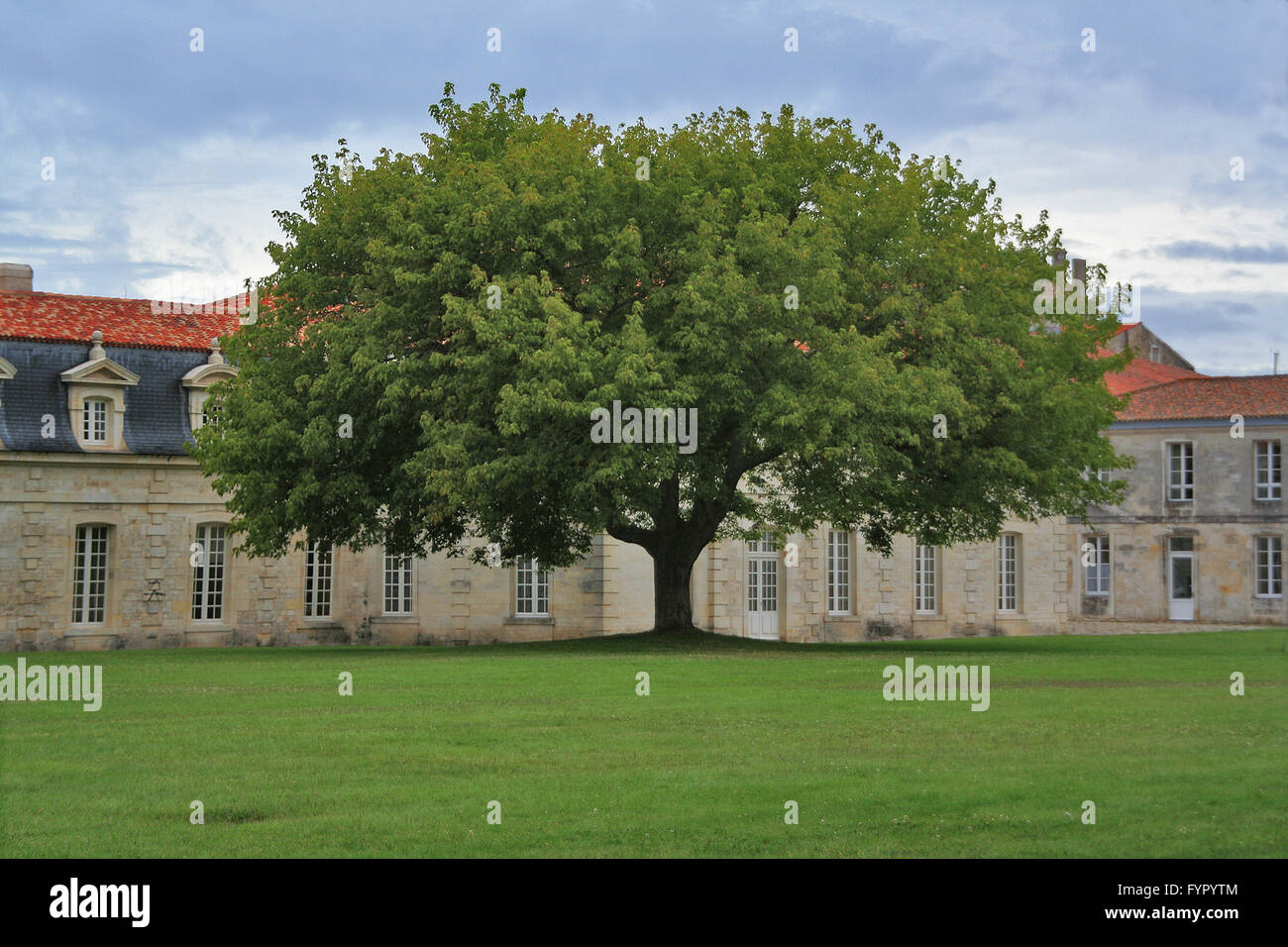 Big Tree In The Corderie Royale In Rochefort France Stock