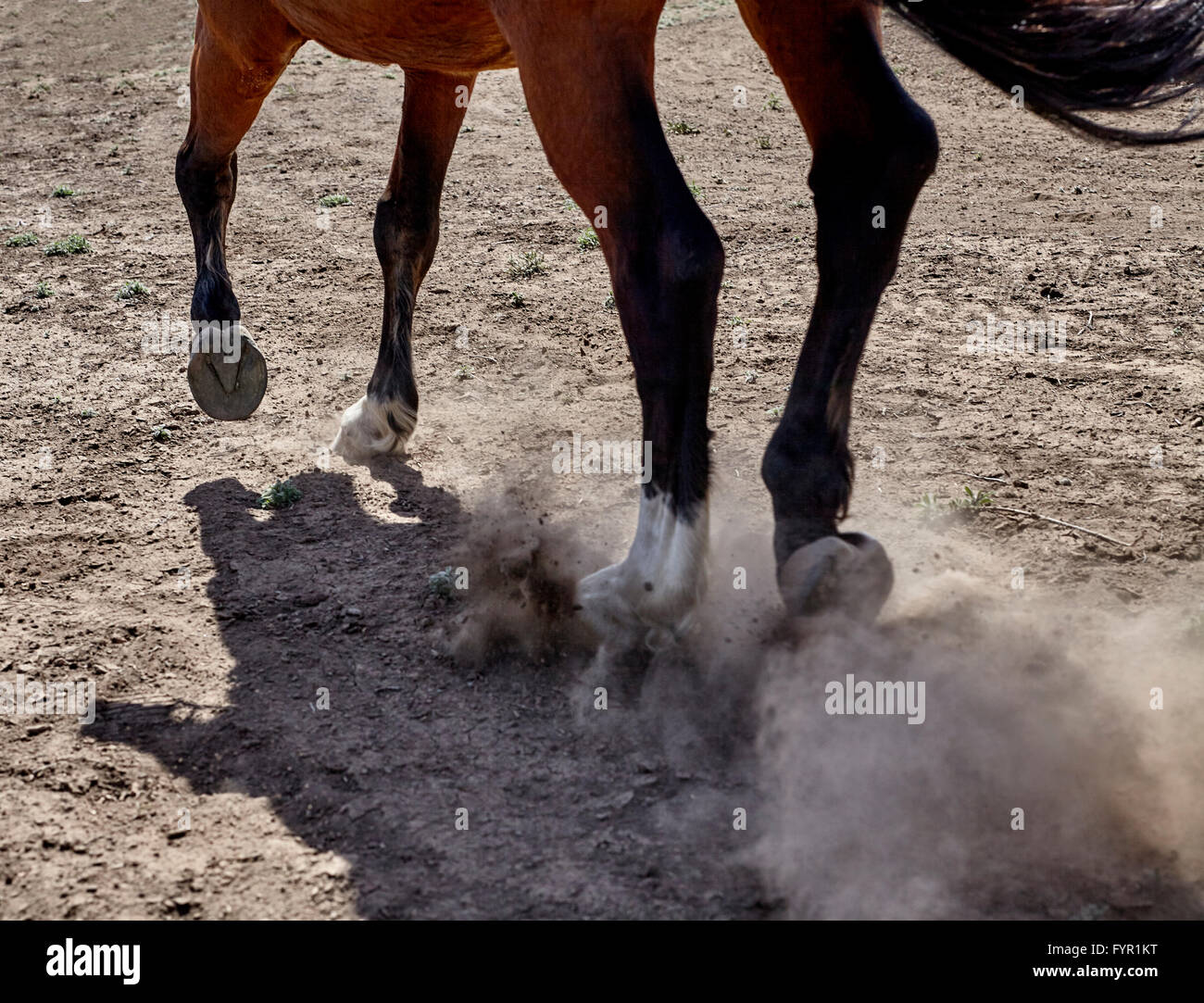 Dressage Horse With Rider Canter Hoof Legs Closeup Photograph Stock Photo Alamy