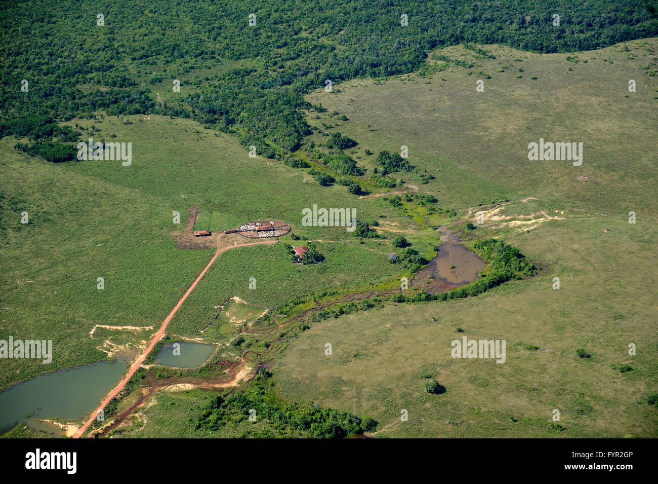 Aerial view, large scale clearing for pastures, Amazon Rainforest, District Itaituba, State of Para, Brazil - Stock Image