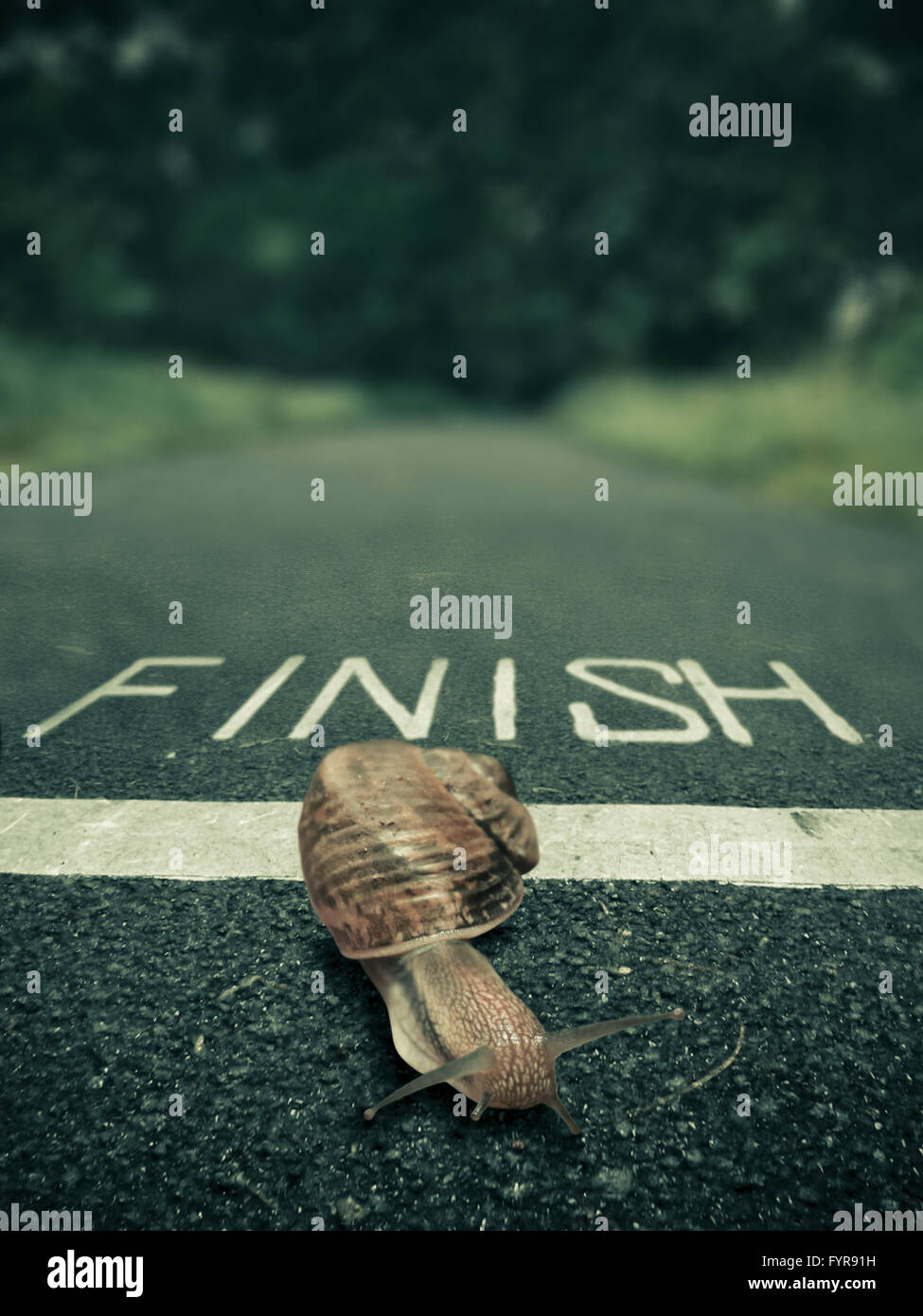 Snail going over the finish line, Concept Stock Photo