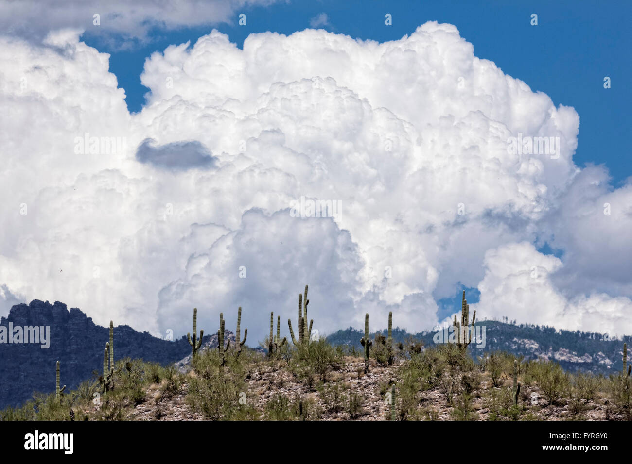 Cumulonimbus Cloud - AZ - Stock Image