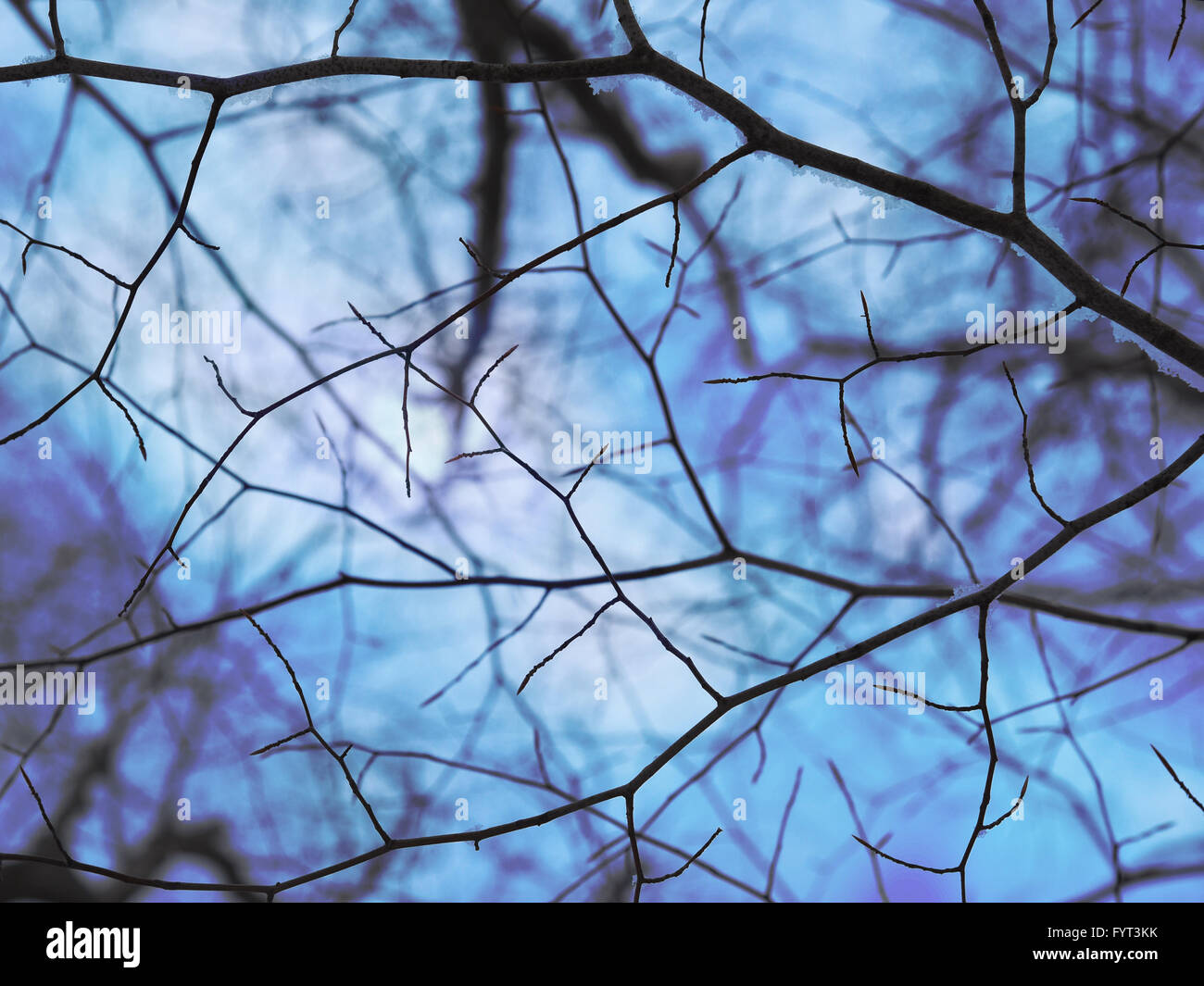 Bare tree branches are against a cold blue winter sky for a seasonal or texture background. There are black lines. Stock Photo