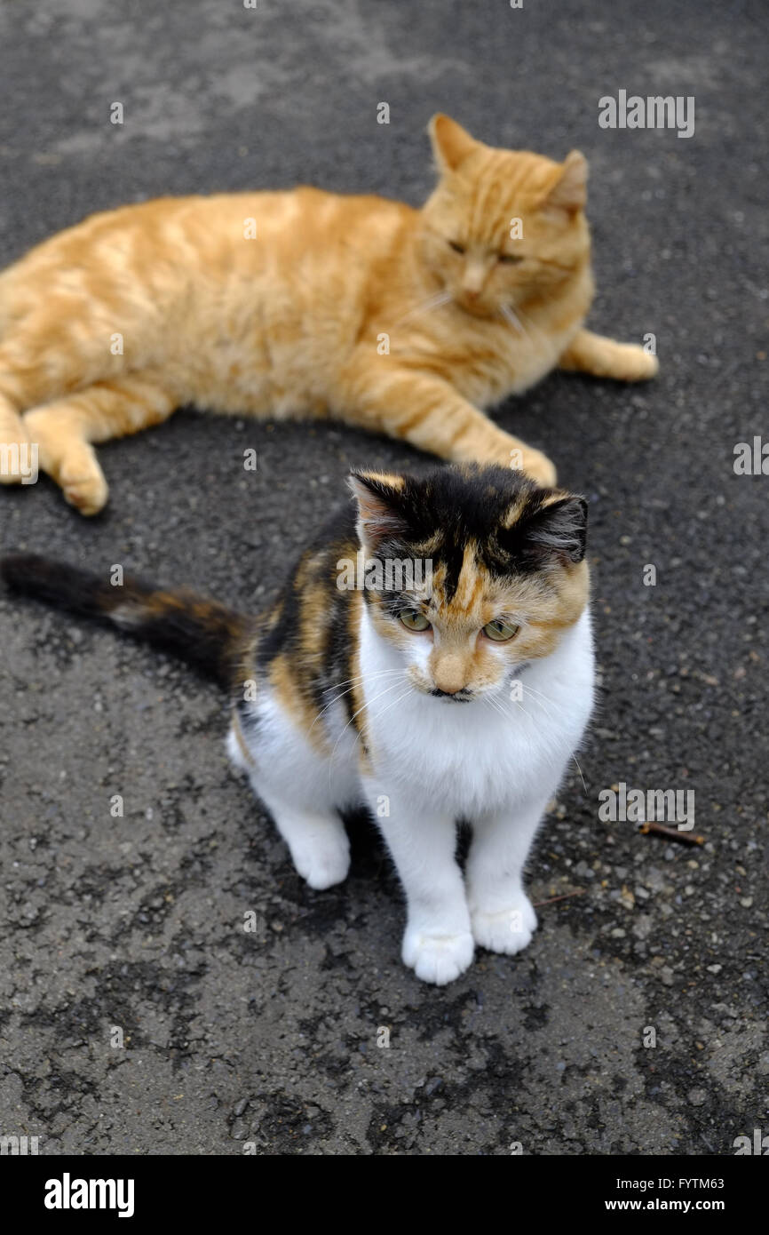 Two cats on the street - Stock Image