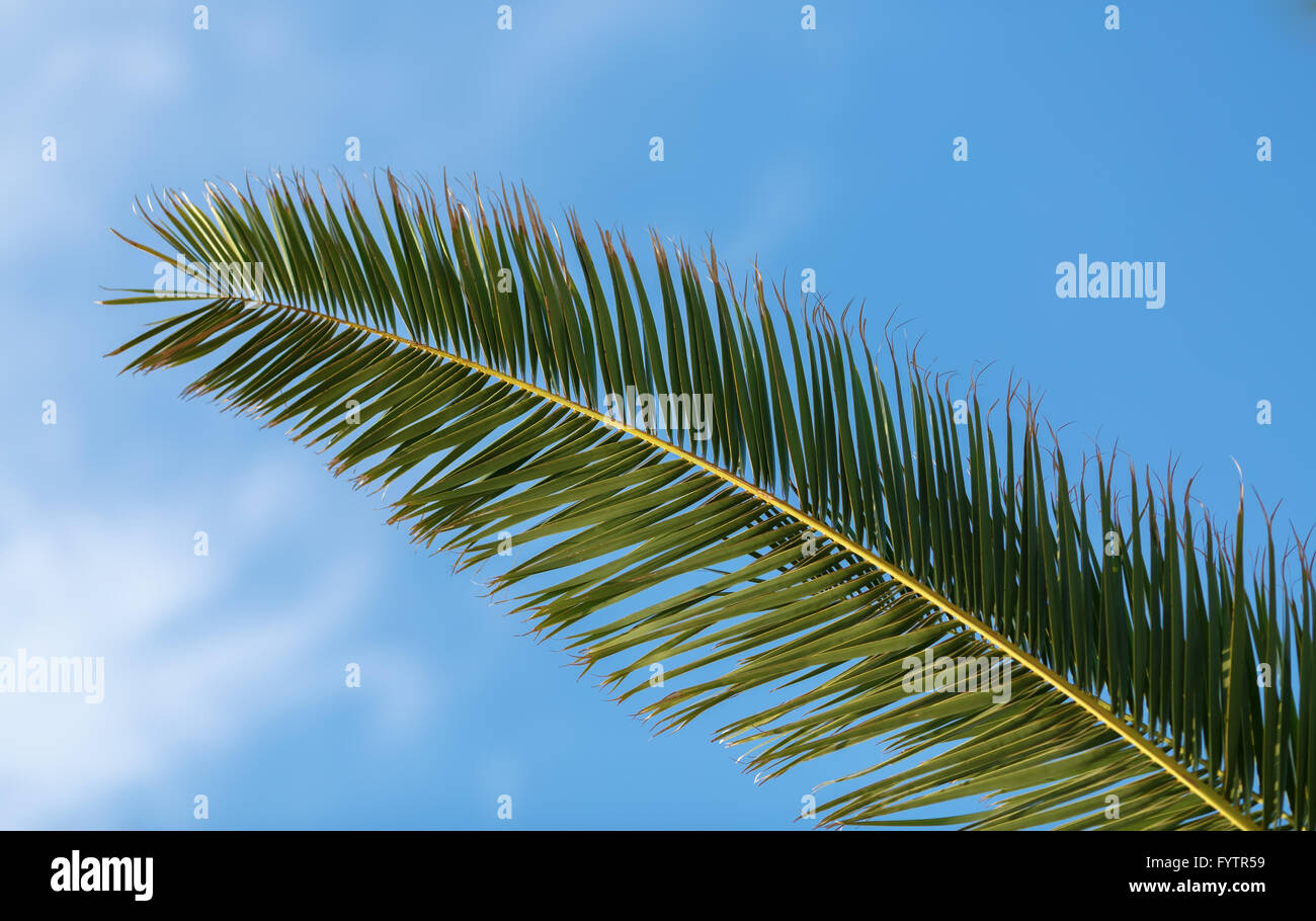 Fading Palm - Stock Image