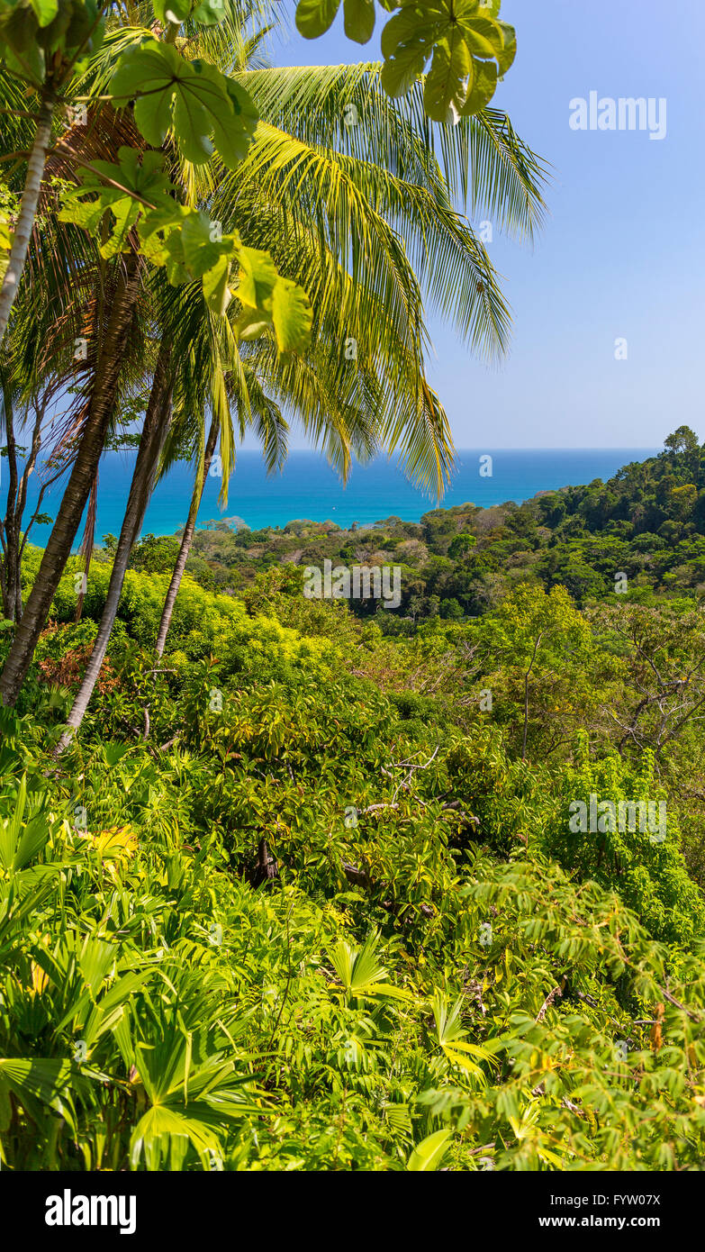 OSA PENINSULA, COSTA RICA - Palm trees, rain forest and Pacific Ocean. - Stock Image