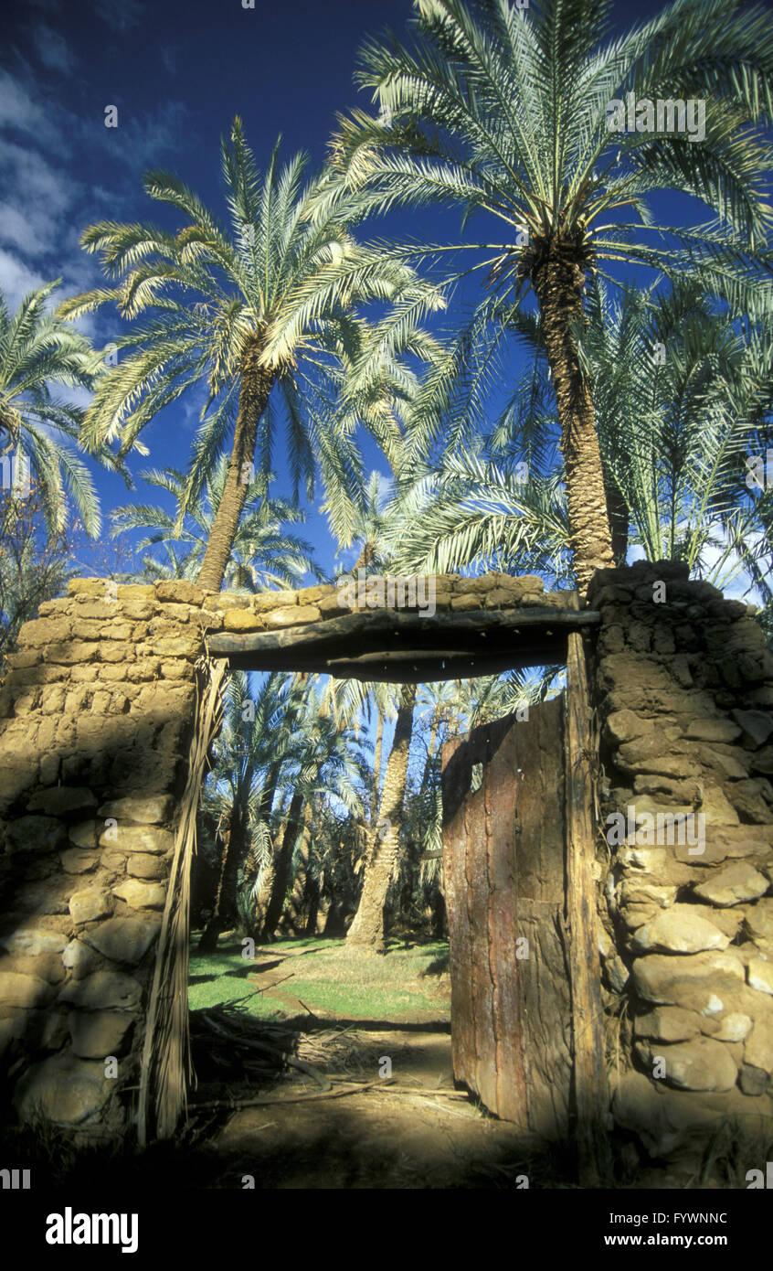 AFRICA EGYPT SAHARA FARAFRA OASIS - Stock Image