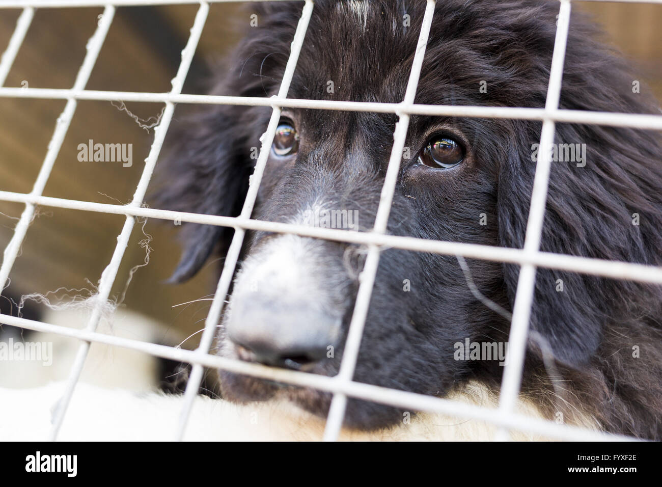Ownerless dog in a cage Stock Photo