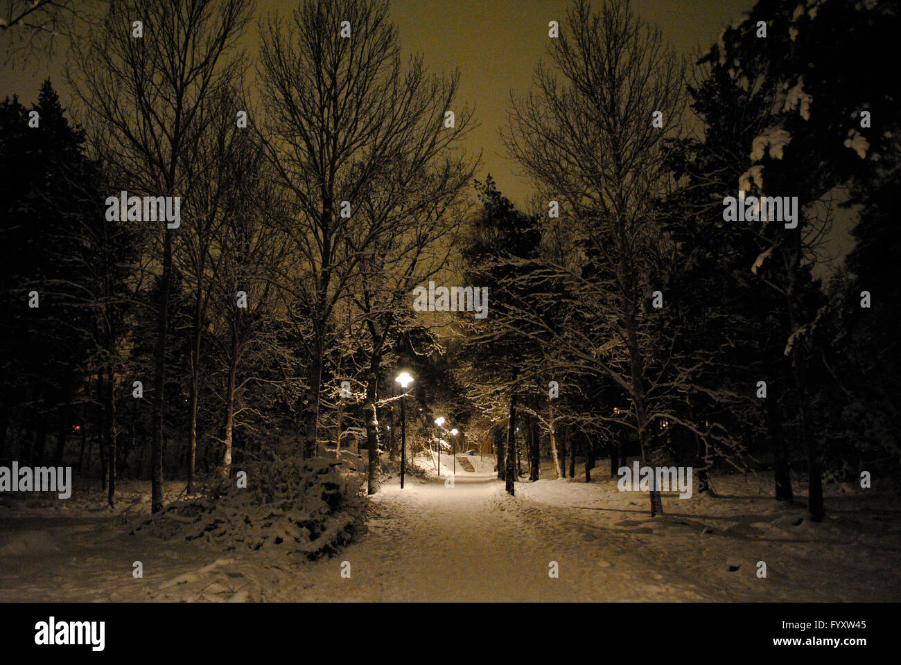 Sweden. Stockholm. Snowy park at night. - Stock Image