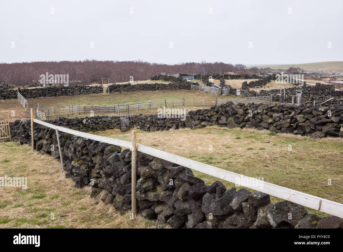 Paddocks made from basalt rock walls in Iceland - Stock Image