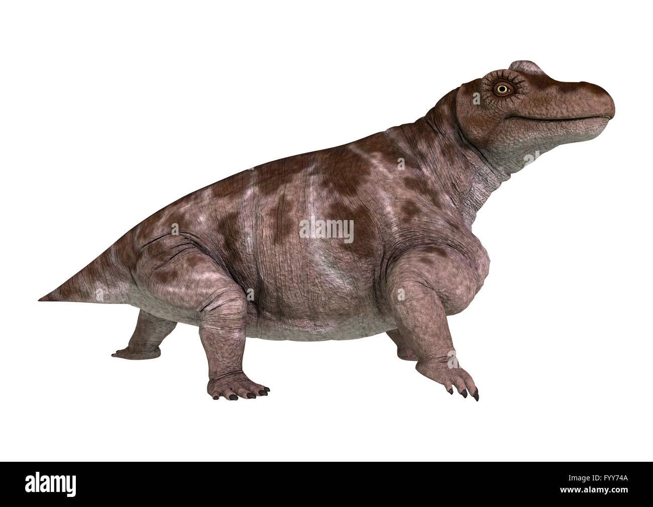 3D rendering of a dinosaur Keratocephalus isolated on white background - Stock Image
