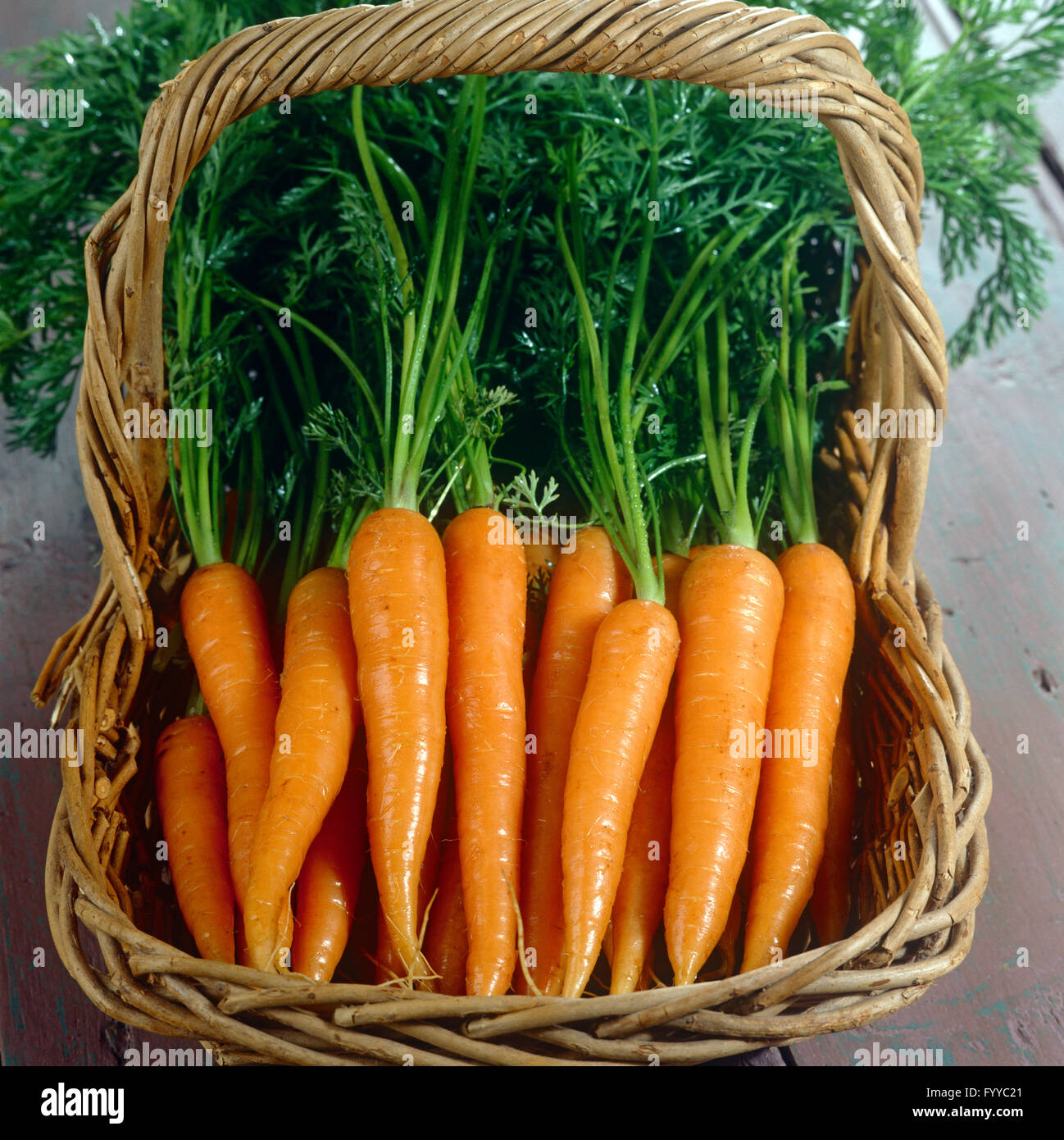 A bunch of carrots with tops in a basket, inside. - Stock Image