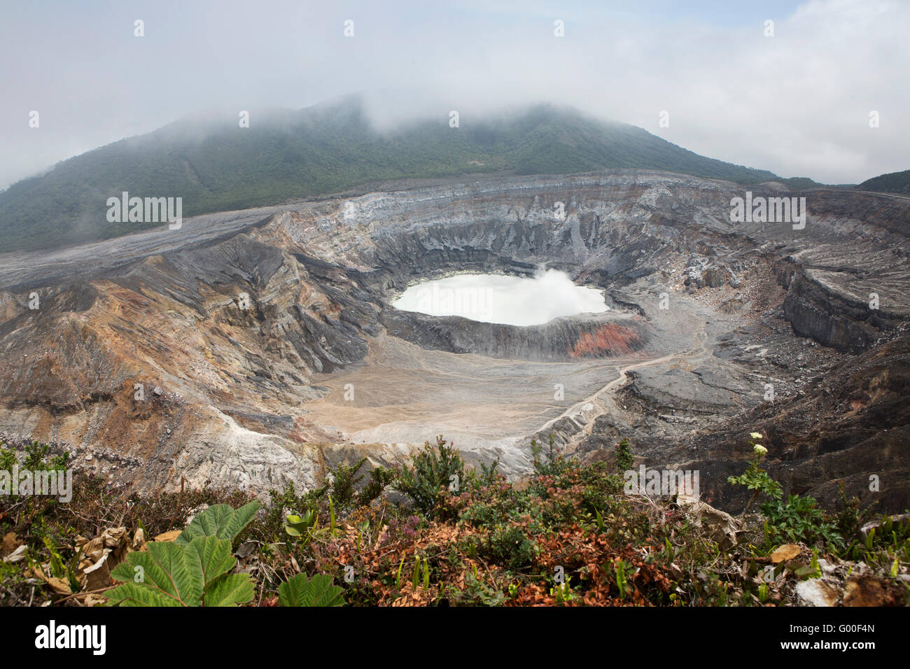 Vegetation at the crater of Poas Volcano in Parque Nacional Volcan Poas (Poas Volcano National Park) in Costa Rica. - Stock Image