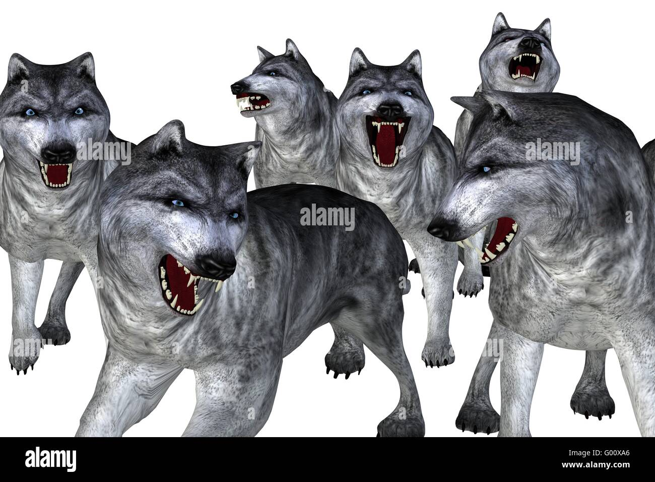 Wolves - Stock Image