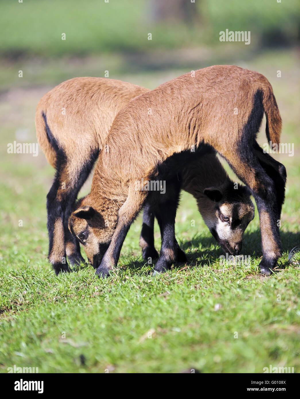 Siblings - Stock Image