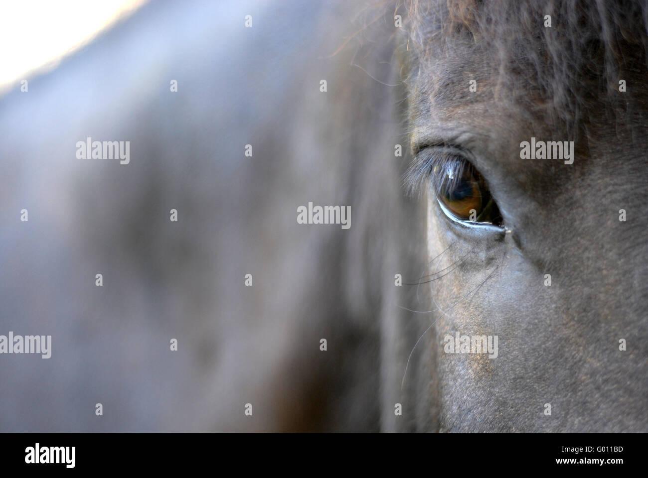 Horses Eye - Stock Image