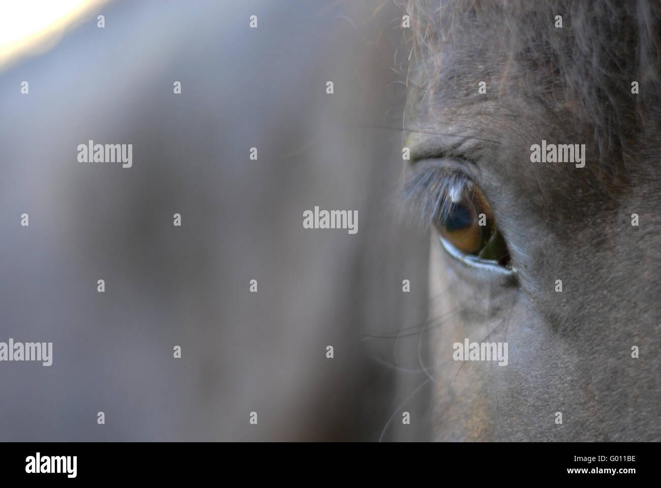 View - Stock Image