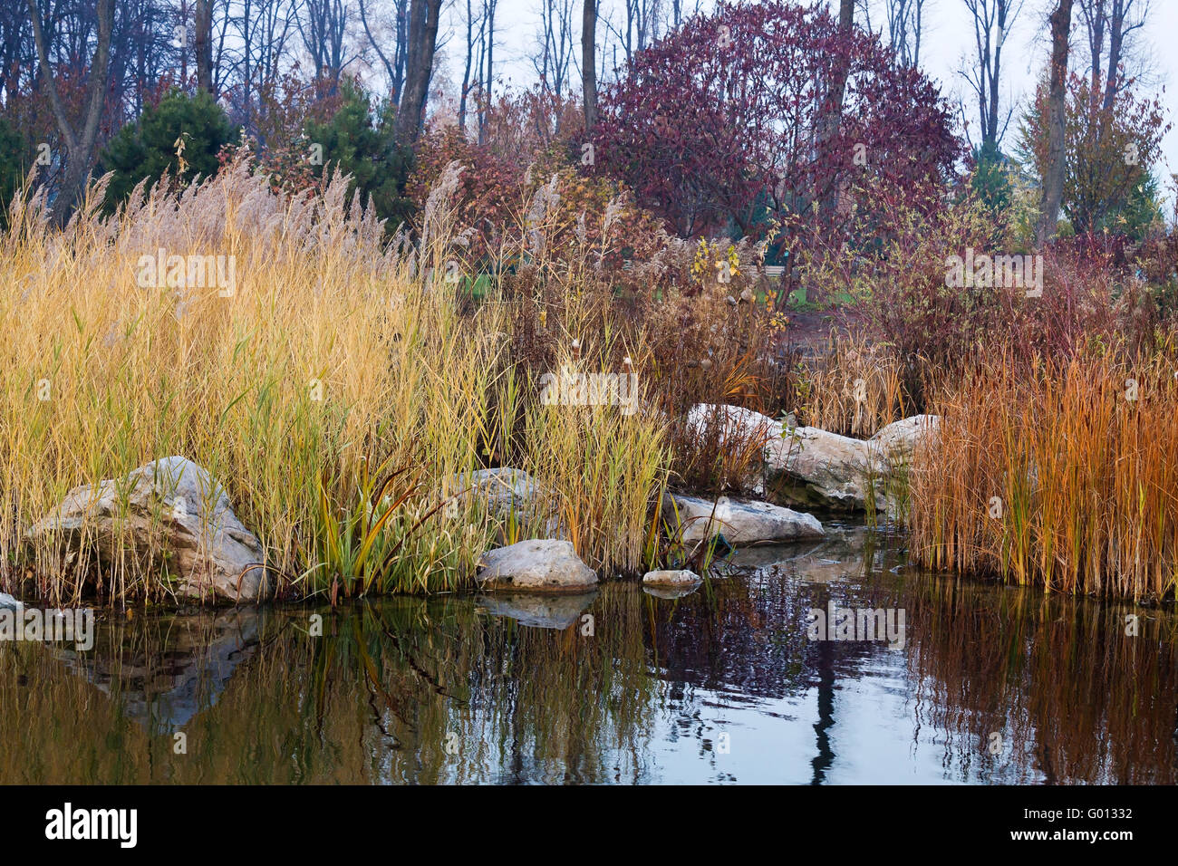 autumn pond with yellowed reeds and bushes - Stock Image