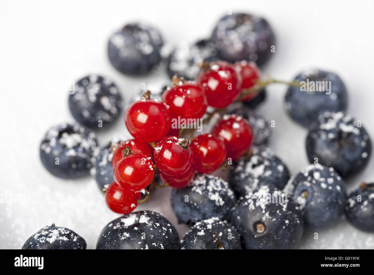 blueberries and red currant with icing sugar on white background - Stock Image
