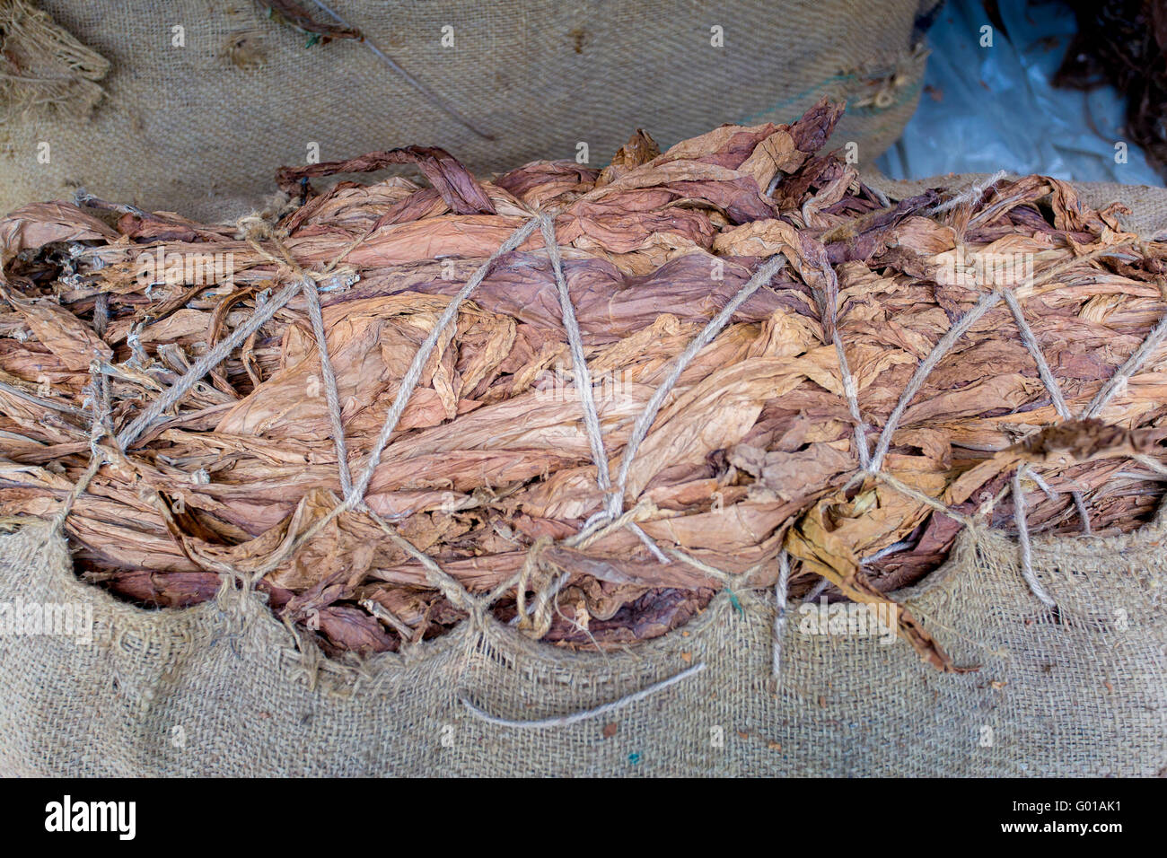 Tobacco in outside of Dhaka, manikganj, Bangladesh. - Stock Image