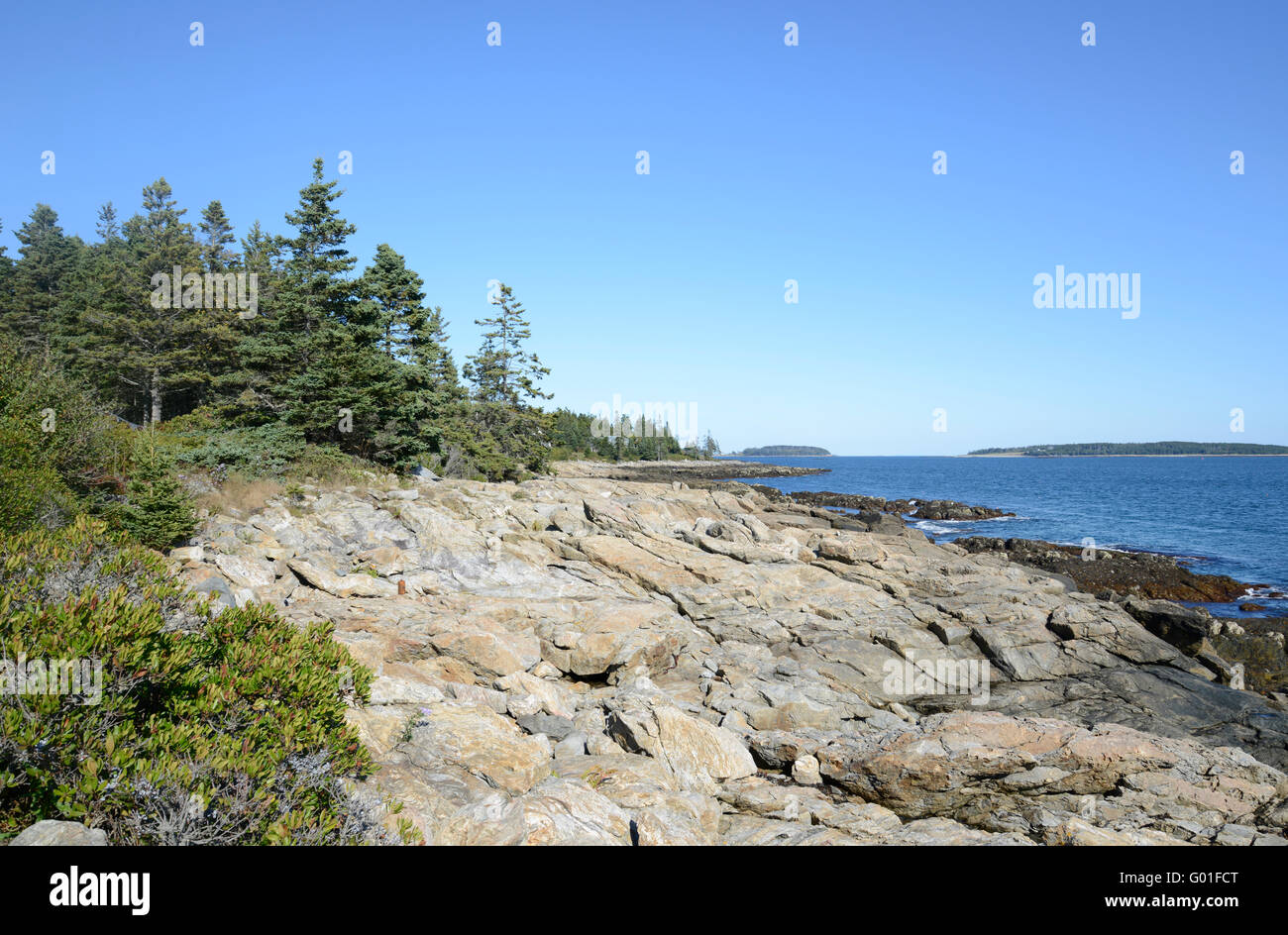 rocks and evergreen trees line the coast of Maine - Stock Image