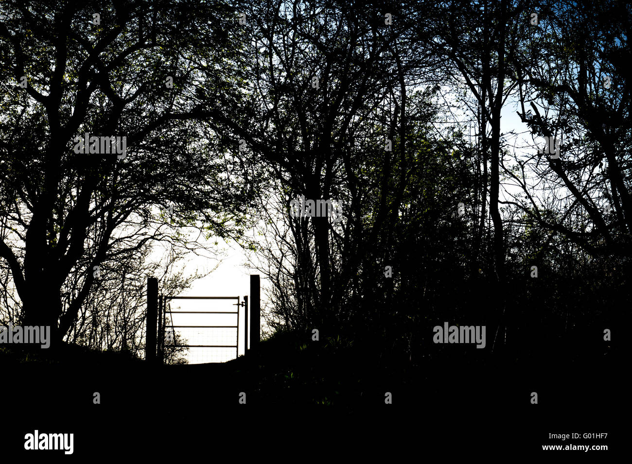 Footpath metal gate and hedgerow silhouette in the Oxfordshire countryside. England - Stock Image