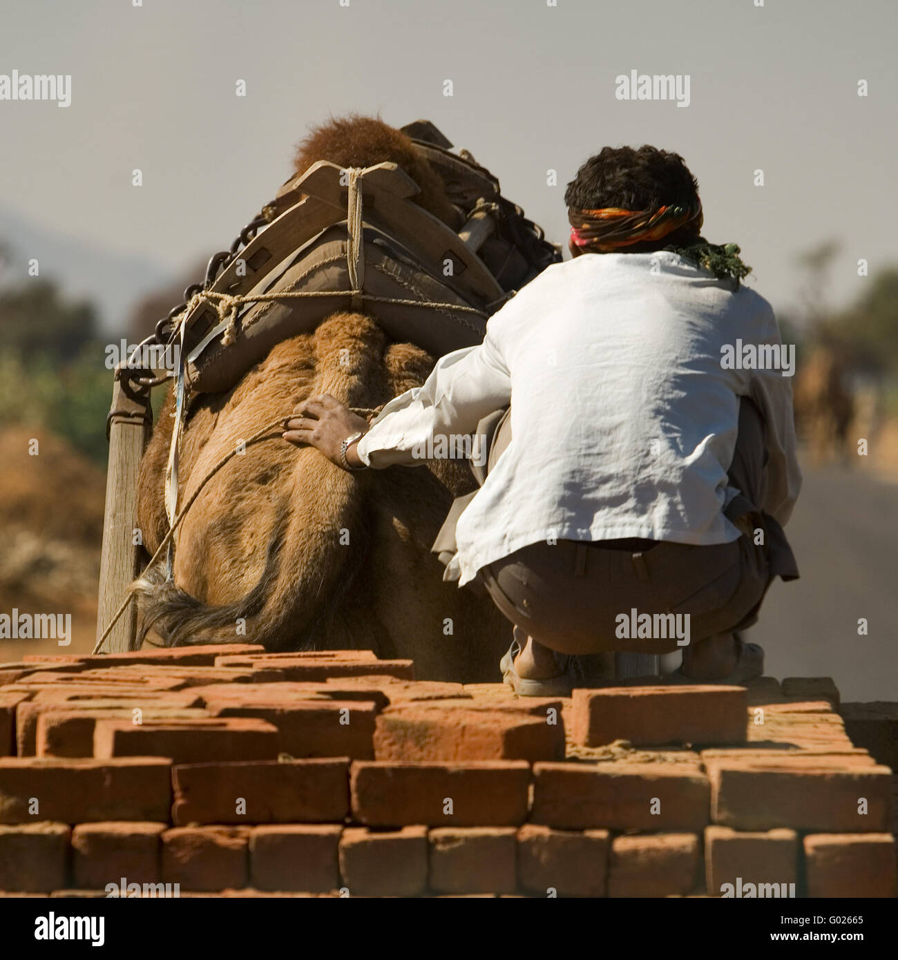 camel with trailer on a street, North India, India, Asia Stock Photo