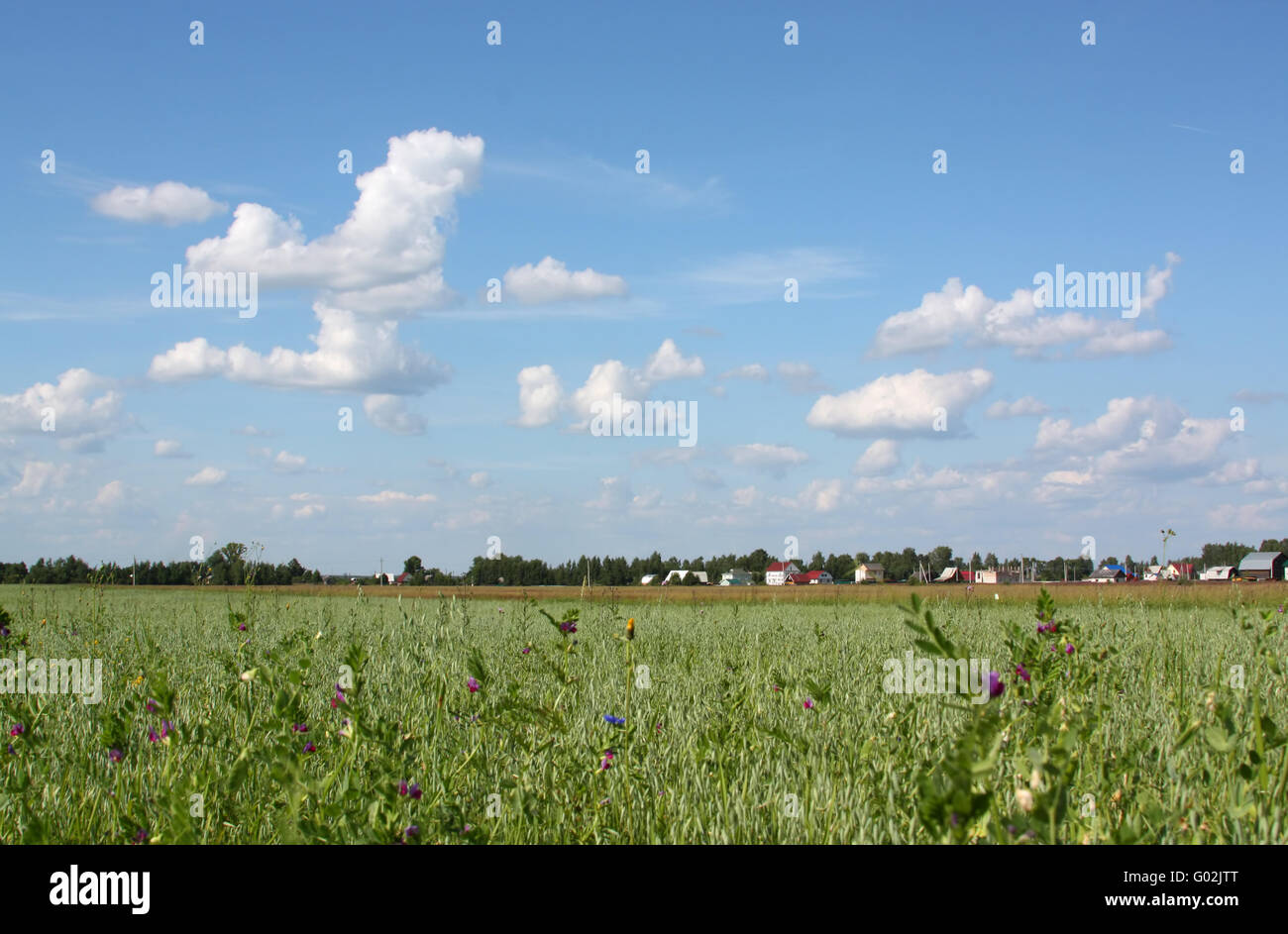 Countryside view of the field with wild flowers and the village away - Stock Image