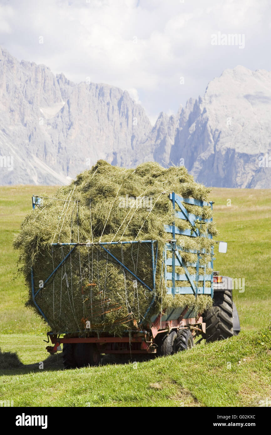 Green fodder harvest on a Alm - Stock Image
