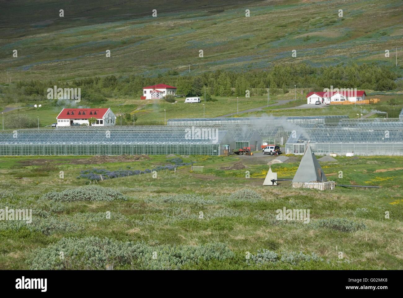 greenhouse - Stock Image