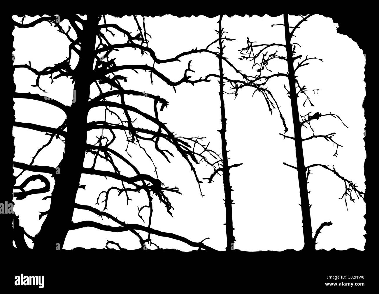 torn wood black and white stock photos images alamy Torn Quad Recovery vector drawing old tree on torn sheet of paper stock image