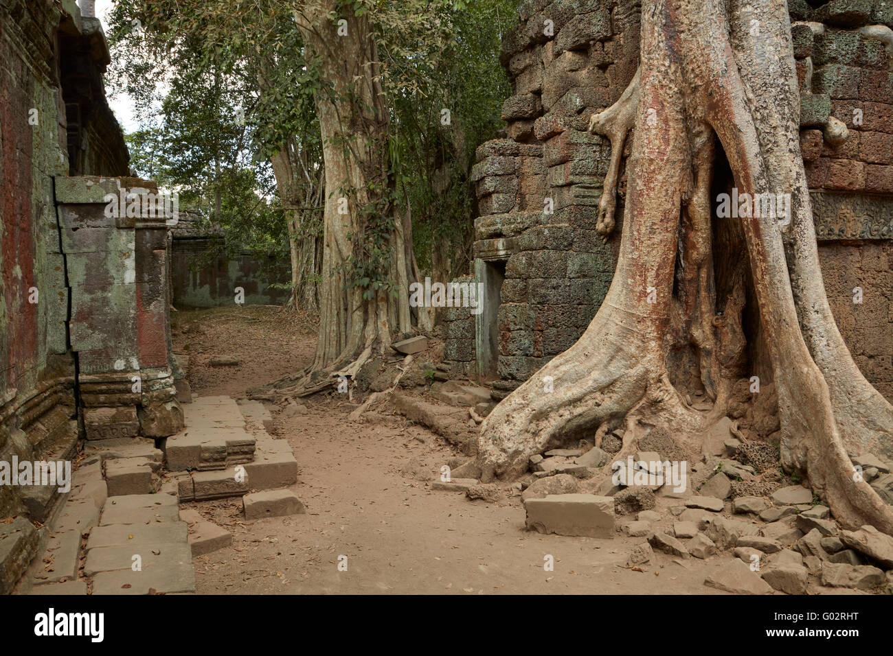 Tree roots growing over Ta Prohm temple ruins (12th century), Angkor World Heritage Site, Siem Reap, Cambodia - Stock Image