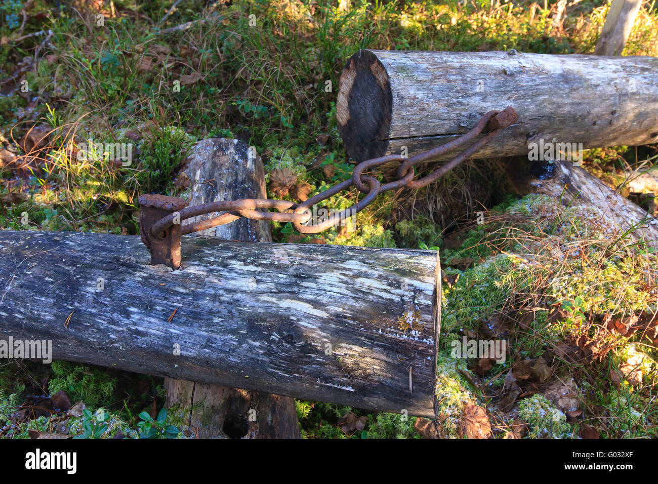chained tree trunk - Stock Image