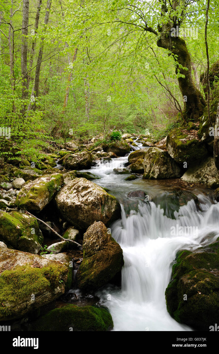 Forest waterfall - Stock Image
