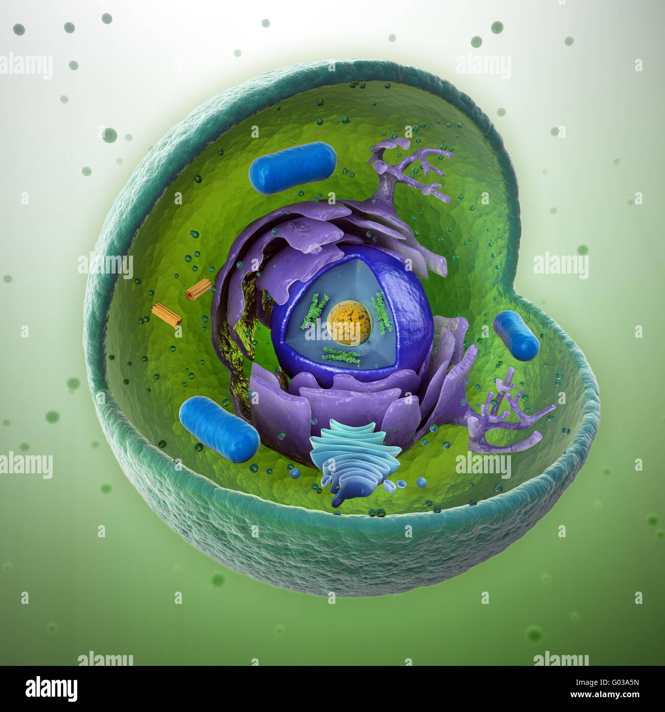 Animal Cell Stock Photos Images Alamy Diagram Labeled 3d View Original Image Cut Away Scientifically Correct Illustration