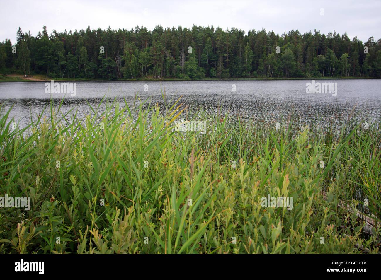 Quiet nature. Sweden Stock Photo