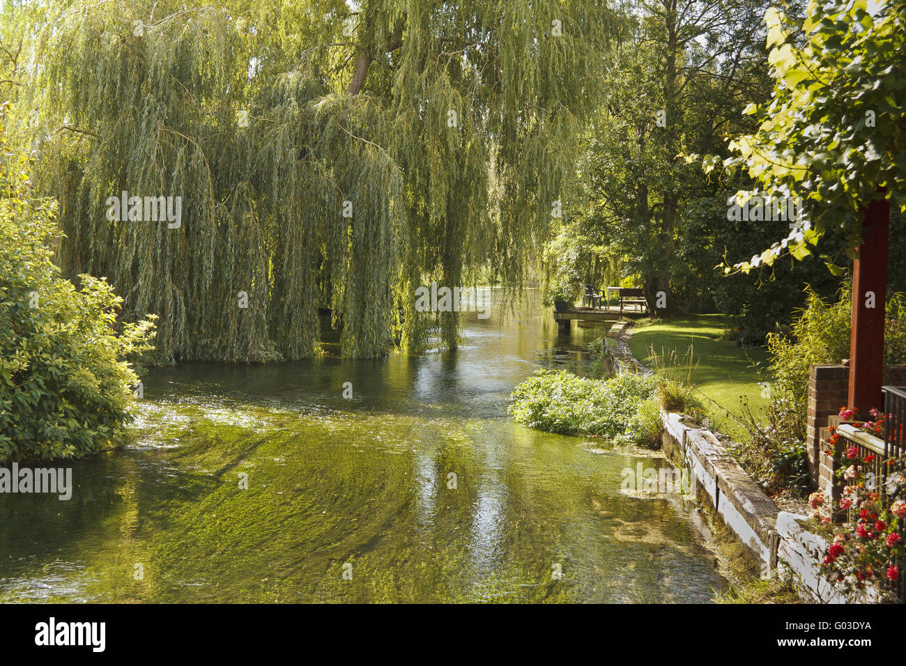 UK Berkshire Boxford Willow Trees On The River - Stock Image
