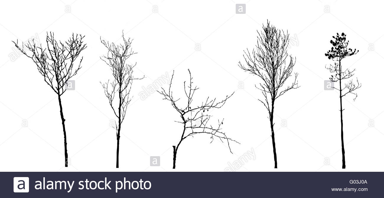 set tree silhouette on white background, vector illustration - Stock Image