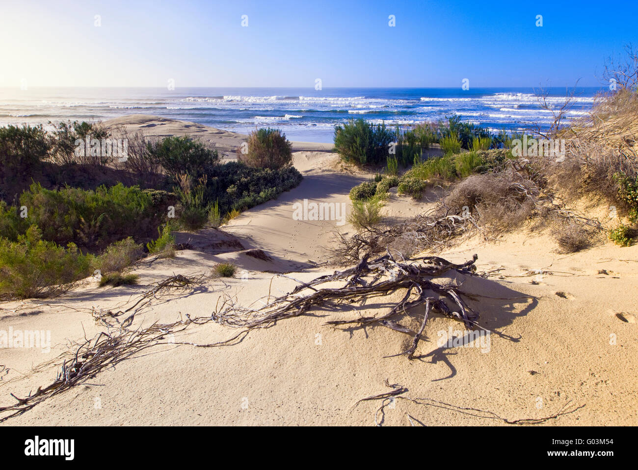 A typical sand dune and coastal vegetation of the Eastern Cape Coast in South Africa - Stock Image
