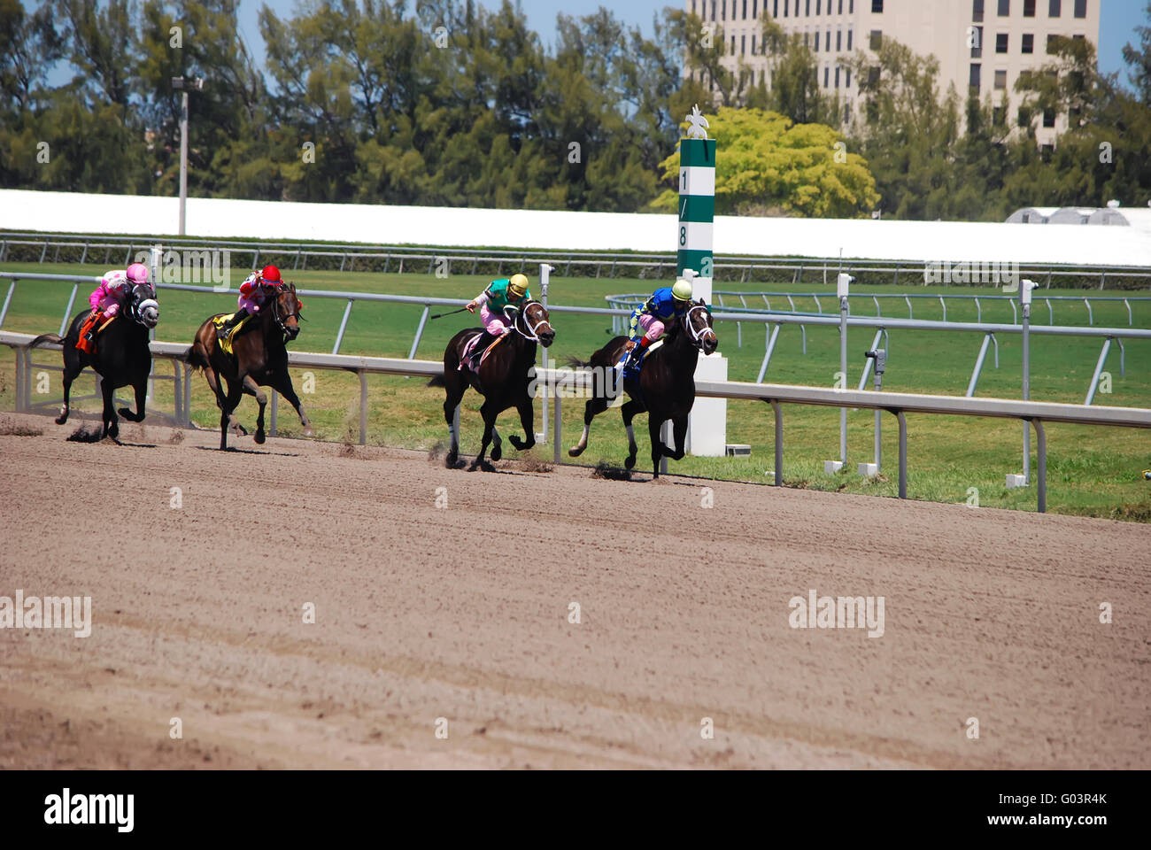 Racehorses Heading to the Wire - Stock Image