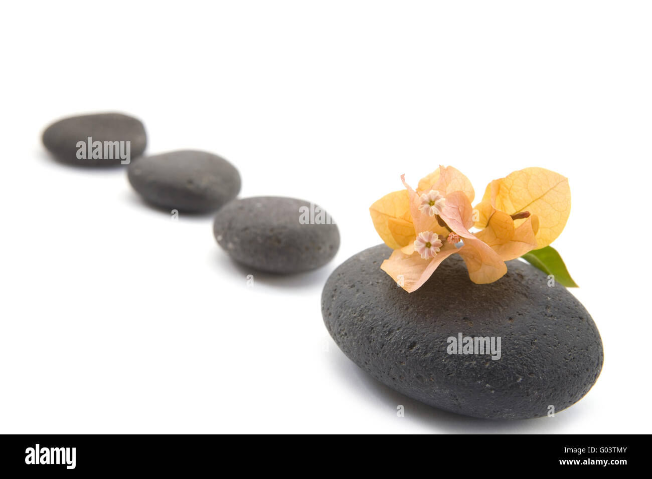 zen stones with bouganvilla flowers isolated. - Stock Image
