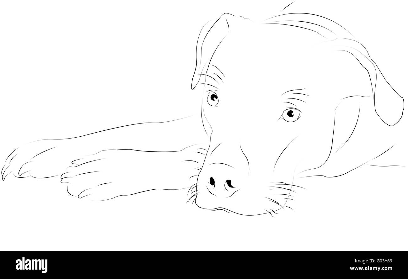dog as line drawing Stock Photo