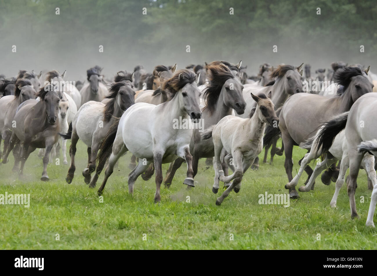 equus ferus przewalskii germany stock photos equus ferus przewalskii germany stock images alamy. Black Bedroom Furniture Sets. Home Design Ideas