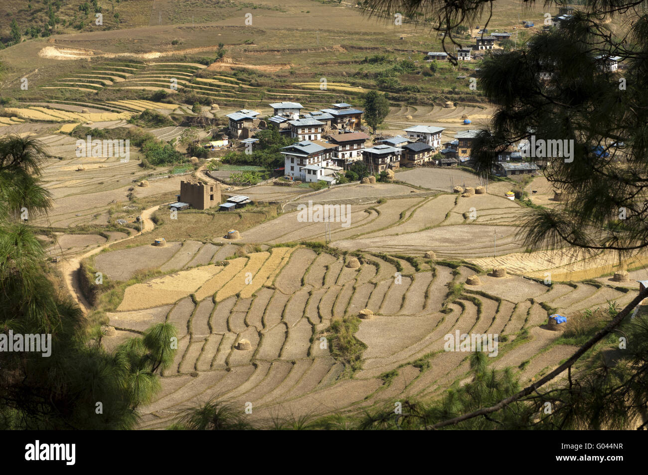 The village of Sopsokha inmidst terraced rice plot - Stock Image